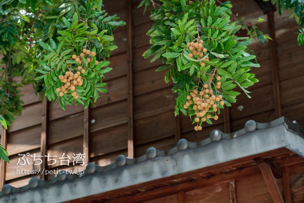 十八卯茶屋の外の龍眼の木