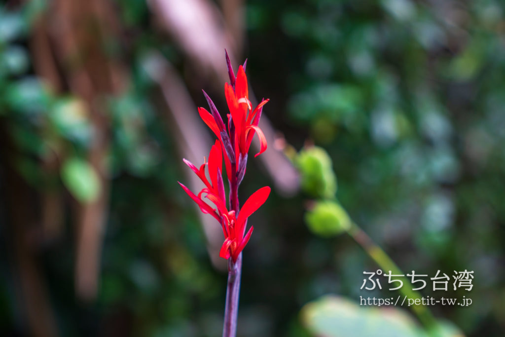 野柳地質公園の植物