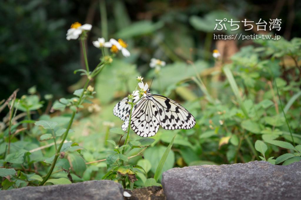 野柳地質公園の蝶々