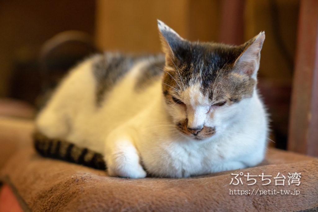 山城創作坊の看板猫