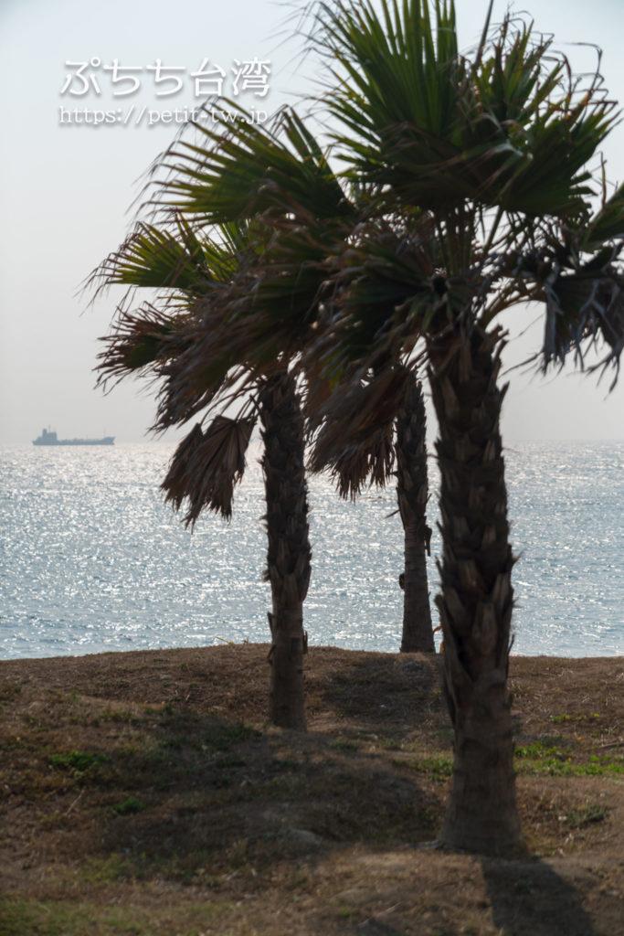 旗津半島の海岸のヤシの木