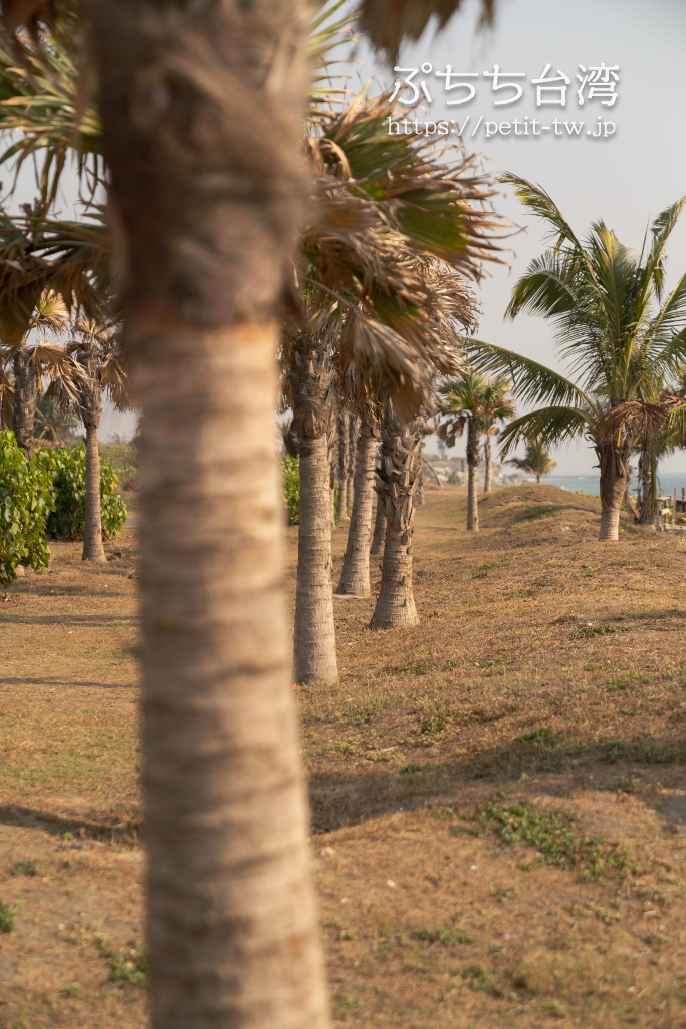 旗津半島のサイクリングロードの椰子の木