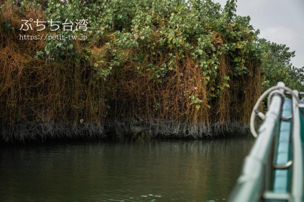 四草緑色隧道のマングローブ