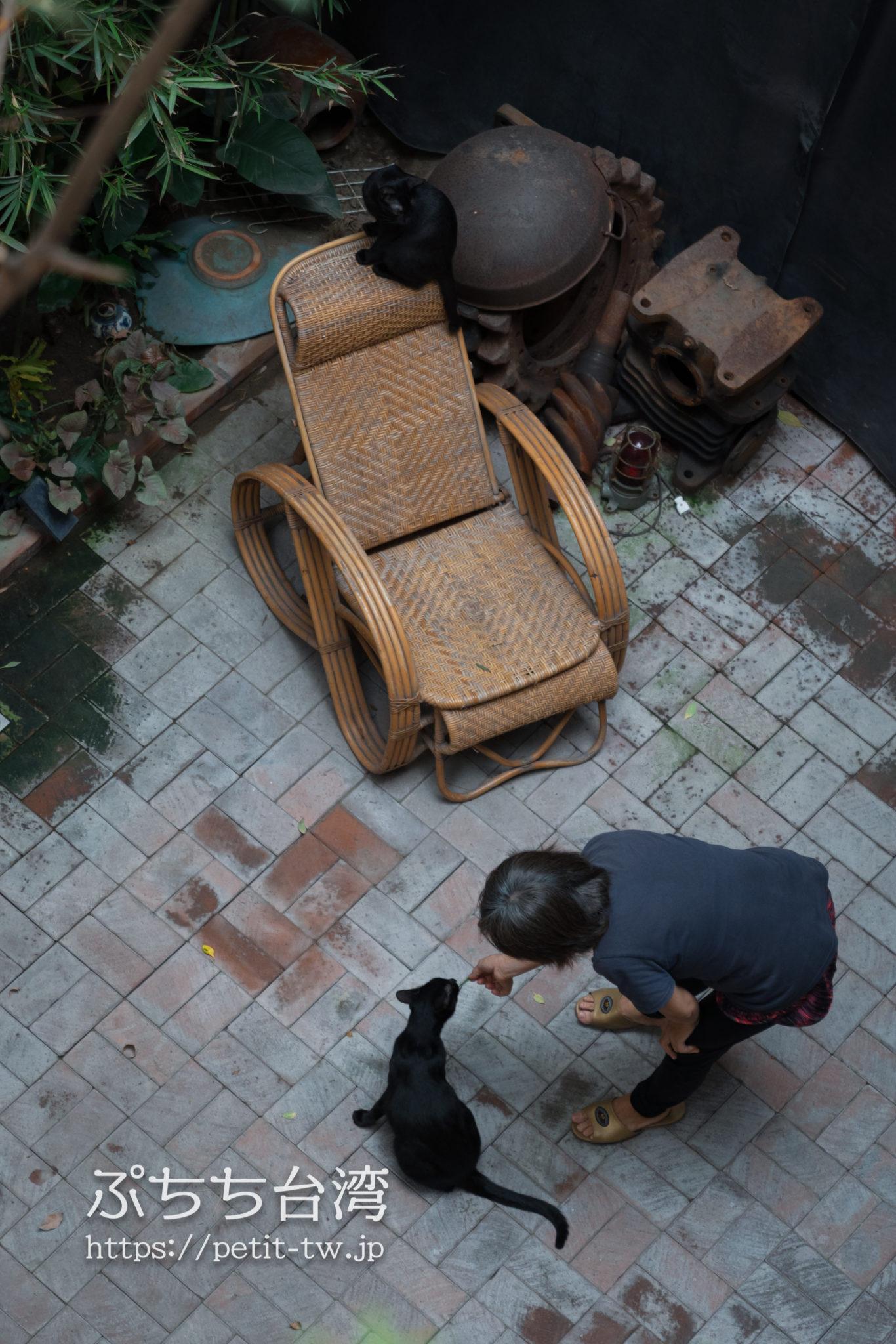 台南のアトリウムの猫 APとオイル