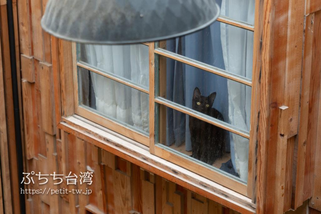 台南のアトリウムの猫