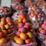 玉井芒果批発市場 玉井のマンゴー市場の愛文マンゴー