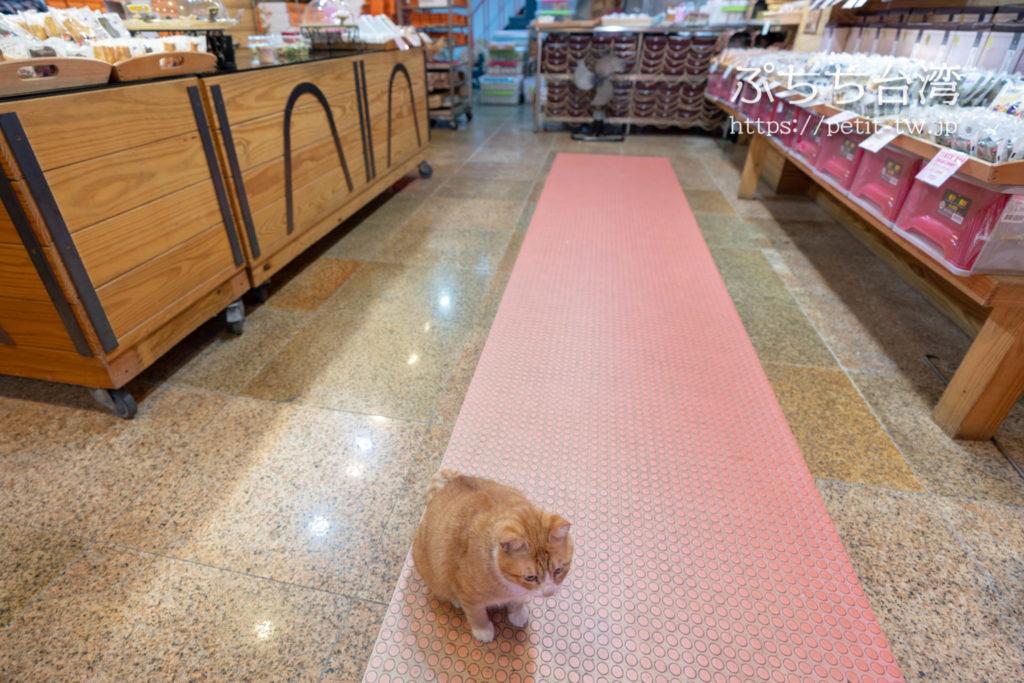艾妮西点烘焙の看板猫ミミちゃん