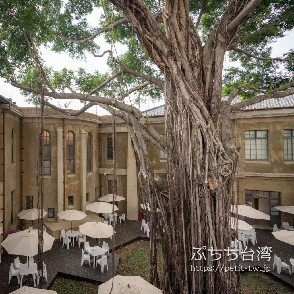 台南市美術館一館(原台南警察署) 臺南市立美術館一館 臺南州警察署の中庭の大木