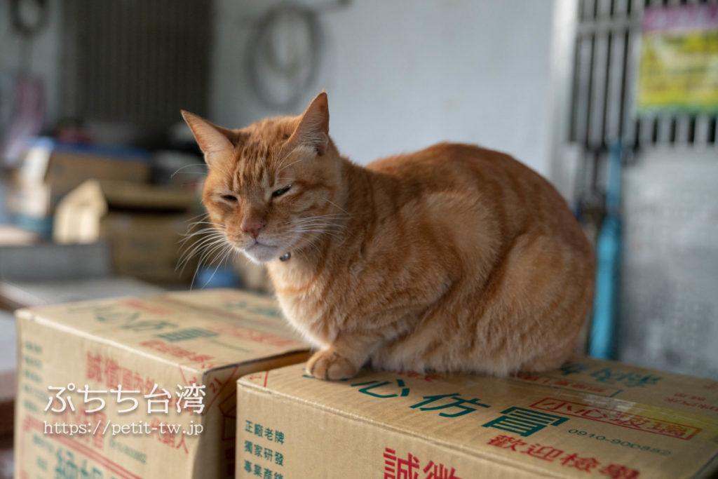 台湾の猴硐猫村の猫