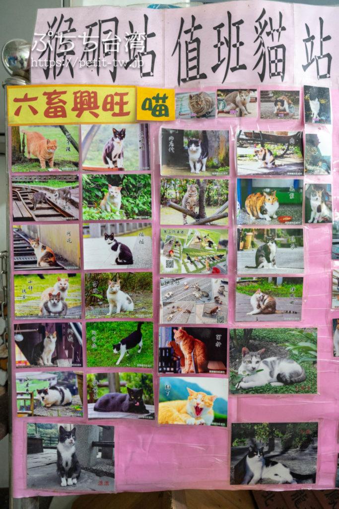 台湾の猴硐猫村の猫のフォトスナップ