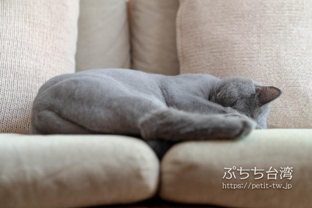 台南のAirbnb 小巷旺宅の猫