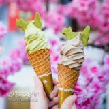 台北猫空のCAFE Alley、カフェ巷の猫型クッキー付き台湾茶ソフトクリーム