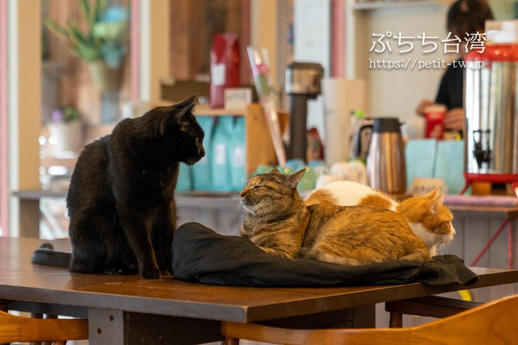 高雄の猫カフェ、描Cafe X 屋Brunchの店内の猫