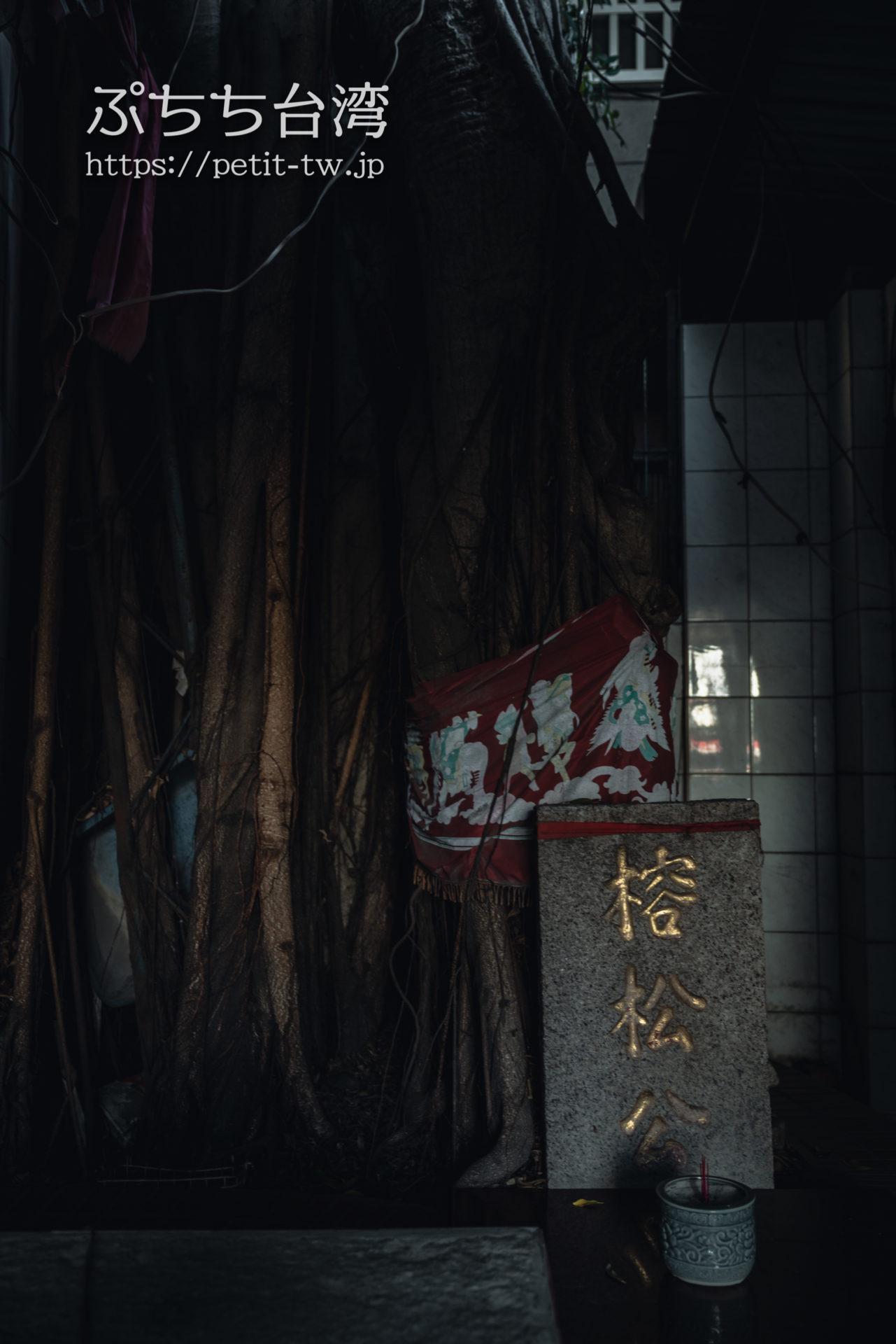 台南の神農街 ガジュマルの木