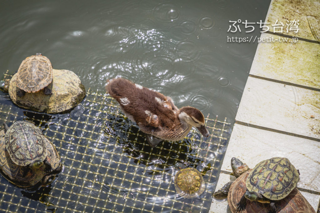 台湾高雄の蓮池潭の風景